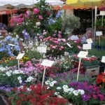 Fabulous flower markets.